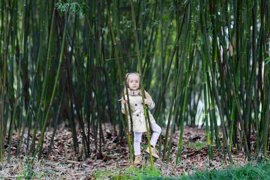 How To Propagate Bamboo: Different Ways Explained