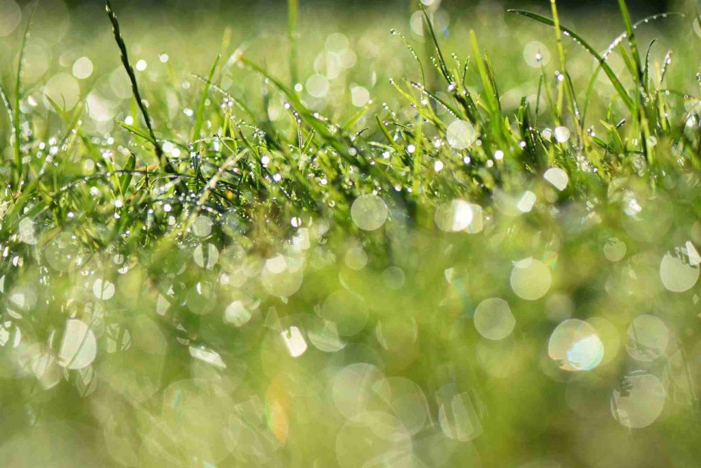 How To Get Rid Of Lawn Bubbles